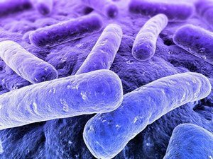 Микоплазма гениталиум